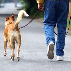 Бизнес идея: услуги дрессировки животных