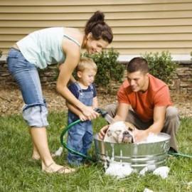 Бизнес идея: Как заработать на ухаживании за домашними питомцами?