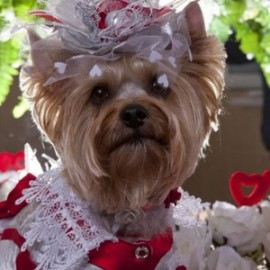 Бизнес идея: проведение свадебных торжеств для собак